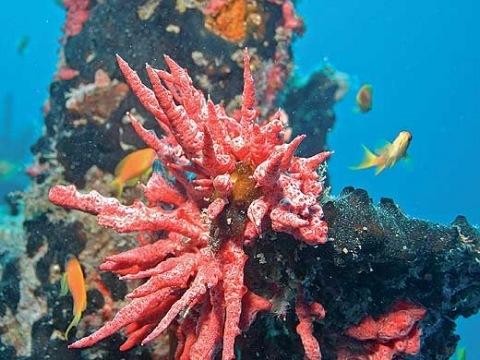Maledivy - Gaafu Alif Atoll