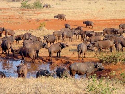 Keňa - Jižní Pobřeží