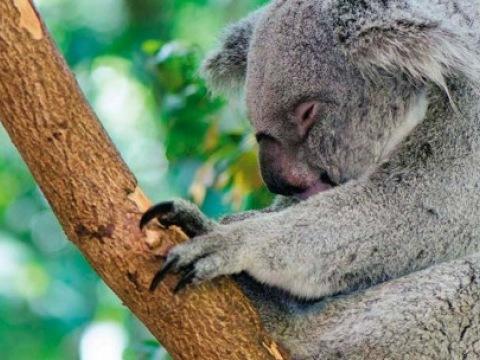 Austrálie a Bali - vzhůru nohama