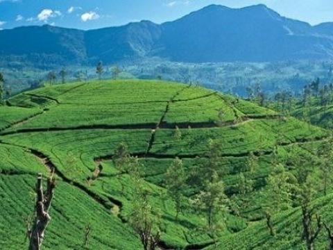 To nejlepší ze Srí Lanky - 10 nocí