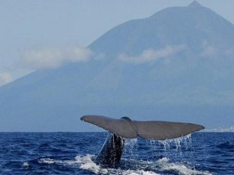Azory - Pozorování Velryb - Pico